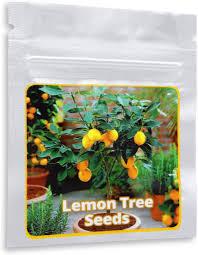 mini zitronenbaum magic of nature