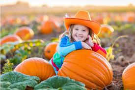 Best Pumpkin Patch Fort Worth Tx by Austin Real Estate News