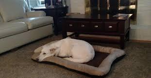 Dog Urine Wood Floors Vinegar by Stubborn Urine Smell In Carpet And Hardwood Floor Area Hometalk