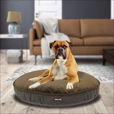Kirkland Dog Beds by Living Rooms Design Magnificent Reviews On Costco Dog Beds