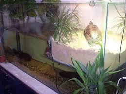 turtles what is the best tank size and configuration for red