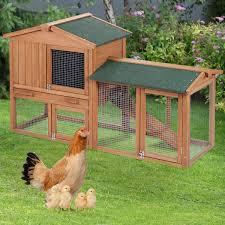 Cacklberry Inn BackYard Chickens