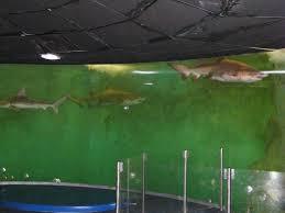grand aquarium de malo horaire aquarium st malo 28 images nouveaux horaires d