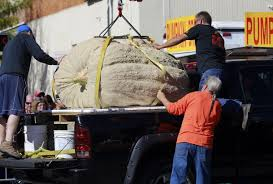 Northwest Ohio Pumpkin Patches by Ohio Giant Pumpkins Growers Engage In Battle Of Heavyweights