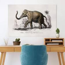 leinwand elefant kaufen bilderwelten