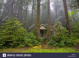 A cabin in the woods in a northwest evergreen forest Stock