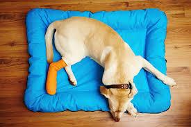 Broken Leg in Dogs Symptoms Causes Diagnosis Treatment