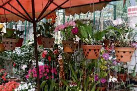 soins pour orchidée pot l atelier des fleurs