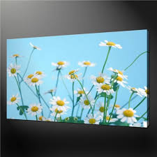 80 Best Pick A Daisy Images On Pinterest