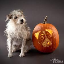 Boston Terrier Pumpkin Pattern by Free Pumpkin Stencils For Halloween