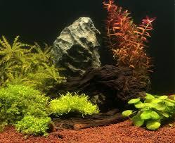 aquarium d eau douce aqua store réussir le sol de aquarium d eau douce