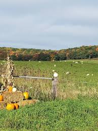 Myers Pumpkin Patch Janesville Wi by Caledonia Township Annual Sale Trail 3rd Sat In October Annually