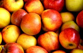 Nj Pumpkin Picking by 10 Top Spots For Apple Picking In Northern New Jersey Sparta Nj