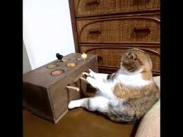 Cat Plays DIY Whack A Mole Game