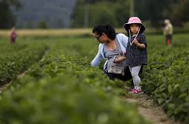 Snohomish Farms Pumpkin Patches by Grab The Family And Head Out To A Local U Pick Farm For Fresh