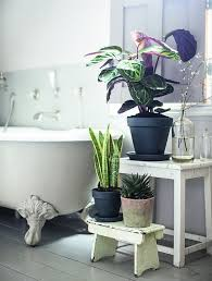 Plants In Bathroom Images archive justine dibella pivotech