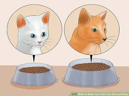 haired cat how to make your cat s fur soft and shiny with pictures