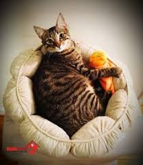 Cat Beds Petco by Petco Premium Tree Penthouse For Cats Everything Cats