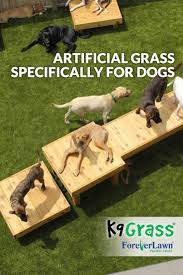 Best 25+ Dog Fort Ideas On Pinterest | Diy Dog Yard, Pallet ... Grumpy Senior Dog In The Backyard Stock Photo Akchamczuk To With Love January 2017 Friendly Ideas In Garden Pricelistbiz Portrait Of Female Boxer Dog Standing On Grass Backyard Lavish Toys For Dogs Toy Organization February Digging Create A Sandbox Just For His Digging I Like Quite Moments Fall Wisconsin Quaint Revival Yesterday Caught My Hole Today Unique Toys Architecturenice Cia Fires Since Sniffing Bombs Wasnt Her True Calling Time A View From Edge All Love Part Two