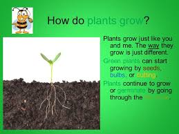 plant growth development grade 2 ppt