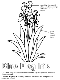 Blue Flag Iris With Labels