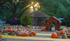 Varieties Of Pumpkins by Pumpkins Squash Gourds Oh My Dallas Arboretum And Botanical