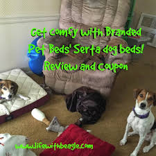 Serta Dog Bed by Life With Beagle Serta Pet Beds Your Dogs May Not Want To Share