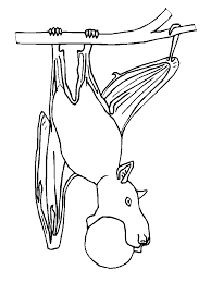 Bats 5 Animals Coloring Pages