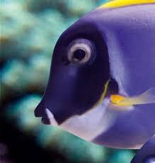 getting here aquarium la rochelle