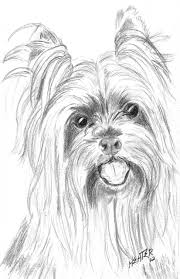 Yorkie Coloring Pages Paginone Biz