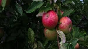 Best Pumpkin Apple Picking Long Island Ny by Fun Fall Activities On Long Island