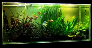 Aquascaping Walstad Natural planted tank