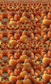 Faulkner Pumpkin Patch by 213 Best Autumn Pumpkins Images On Pinterest Fall Autumn Fall