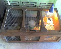 Chicken Brooder Box For Sale Australia With Backyard Poultry Forum ... Chicken Brooder Box For Sale Australia With My New I Built The Raising Baby Chicks Without A Hen First 6 Weeks Outpak Backyard 12 Qc Supply Yes You Certainly Can Brood Outdoors Backyard Chickens Online Buy Whosale Chick When To Move From Coop Outside Ikea Inspired Poultry Forum Fresh Eggs Daily 8 Boredom Busters For Advice Box Simple And Efficient With Pictures