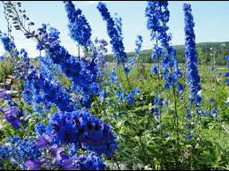 Visiting Alaska Botanical Garden in Anchorage Alaska United