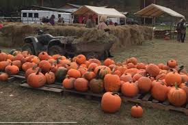 Heather Hill Pumpkin Patch by Popular Kelowna Pumpkin Patch Ready For Visitors Lake Country