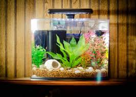 Home Decor : Creative How To Make Fish Tank Decorations At Home ... Fish Tank Designs Pictures For Modern Home Decor Decoration Transform The Way Your Looks Using A Tank Stunning For Images Amazing House Living Room Fish On Budget Contemporary In Contemporary Tanks Nuraniorg Office Design Sale How To Aquarium In Photo Design Aquarium Pinterest Living Room Inspiring Paint Color New At Astonishing Simple Best Beautiful Coral Ideas Interior Stylish Ding Table Luxury
