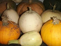Types Of Pumpkins And Squash by Gardens Lhf Kids