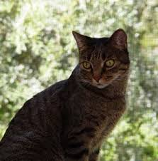 clindamycin for cats pilling cats and dogs safely