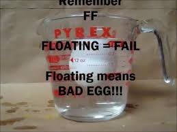 Bad Eggs Float Or Sink In Water by How To Test If An Egg Is Good Or Bad The Truth Bad Eggs Float