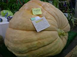 Worlds Heaviest Pumpkin Pie by World Record From Tundra To Times Square