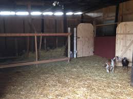 Building A Goat Barn: Part 2 | Such And Such Outstanding Goat Housing Plans Ideas Best Inspiration Home Building A Barn Part 2 Such And 25 Barn Ideas On Pinterest Pen And Nail Blog April 2015 10x12 With 8x10 Openair Loafing Area I Like This Because It Pasture Dairy Info Your Online Shed Designs Beautiful Garden Package Surprising Gallery Idea Design Stalls For Goats Goat Houses Play Weddings And Other Events At Khimaira Farm