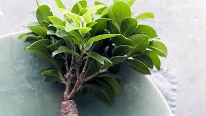 plante de bureau quelles plantes choisir pour le bureau