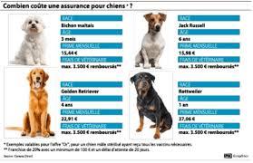 assurer chien combien ça coûte la dh