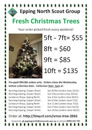 Christmas Tree 7ft Sale by Fresh Christmas Trees For Sale Epping North Scout Group