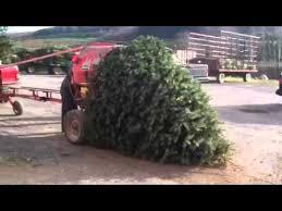 Christmas Tree Baler Craigslist by Christmas Tree Vs Bailer Youtube