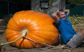 Old Auburn Pumpkin Patch by Pumpkin Patches In The Sacramento Area The Sacramento Bee