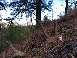 Shed Hunting Utah 2014 by Southern Utah Hunt And Fish Shed Hunting Contest Update