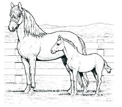 Coloring Picture Of A Horse Head Colouring Pictures Realistic