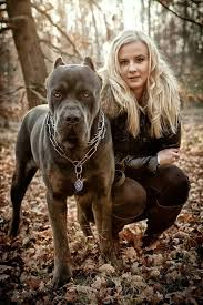 My Cane Corso Shedding A Lot by Horrible Representation Of The Breed But The Look On This Dog U0027s